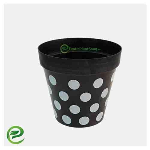 Plastic Pot Black - exoticplantsouq.ae