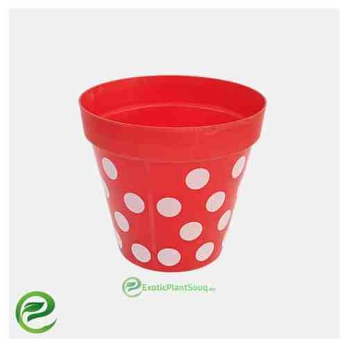 Plastic Pot Red - exoticplantsouq.ae