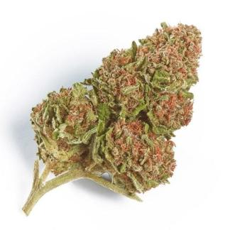 a picture northern lights strain