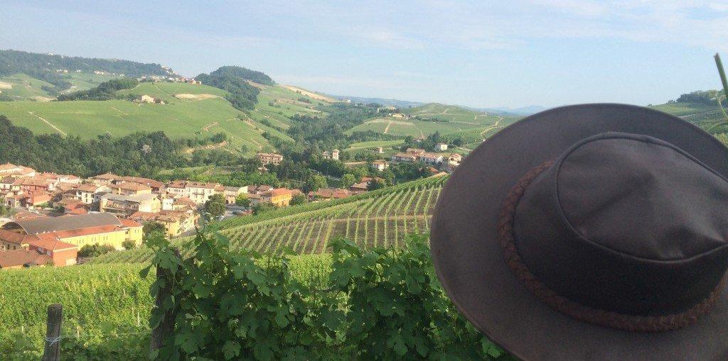 vineyard barolo wine tourism wine travel italy