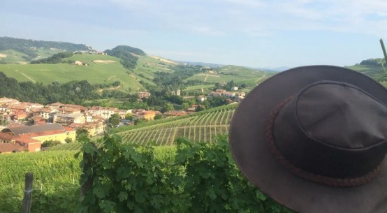 vineyard barolo wine tourism wine travel italy