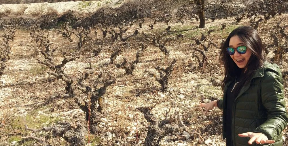 Cyprus Wine Bush Vines