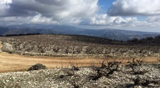 introduction to cyprus wine cypriot
