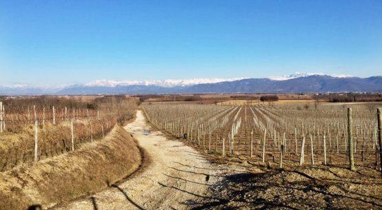 buttrio vineyards friuli miani meroi winery