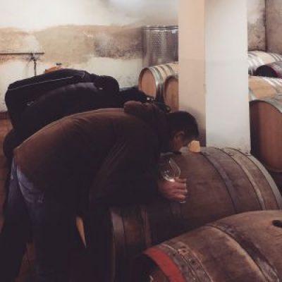 Strekov 1075 Wine