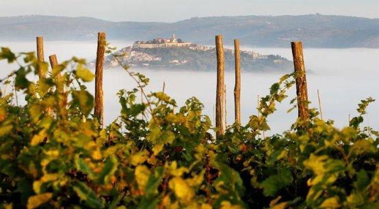 vina benvenuti wine istria croatia