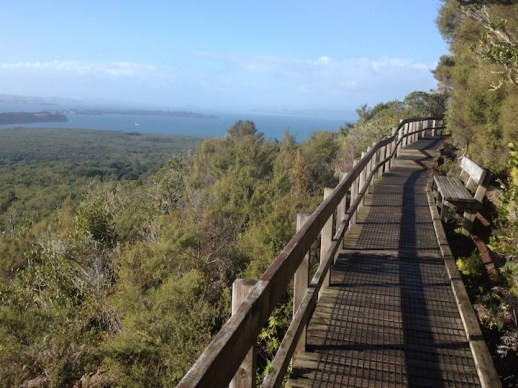 Trail to Rangitoto summit