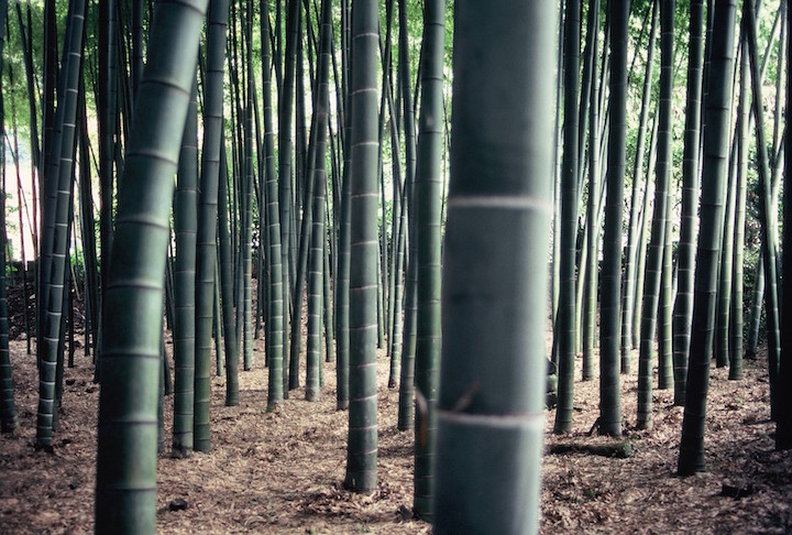 Hokoku-ji (Bamboo temple)
