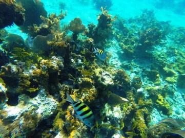 Coral fish, Negril Jamaica