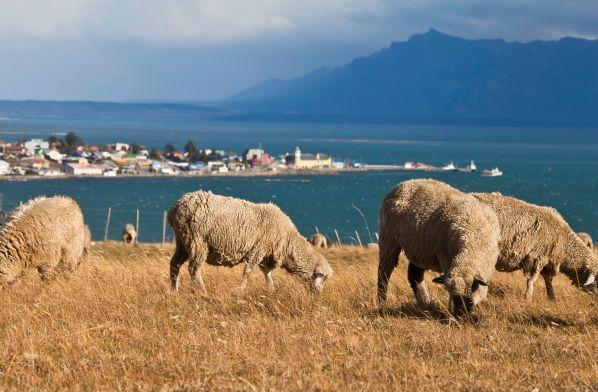 Lo mejor de Puerto Natales y Punta Arenas
