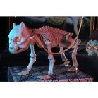 Animated Barking and Growling Skeleton Dog