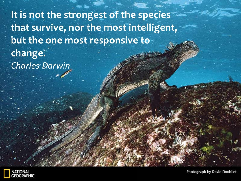 Picture of the Galapagos Marine Iguana with a Darwin quote on survival of the species