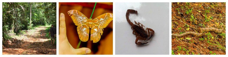 expat life- bugs in Panama