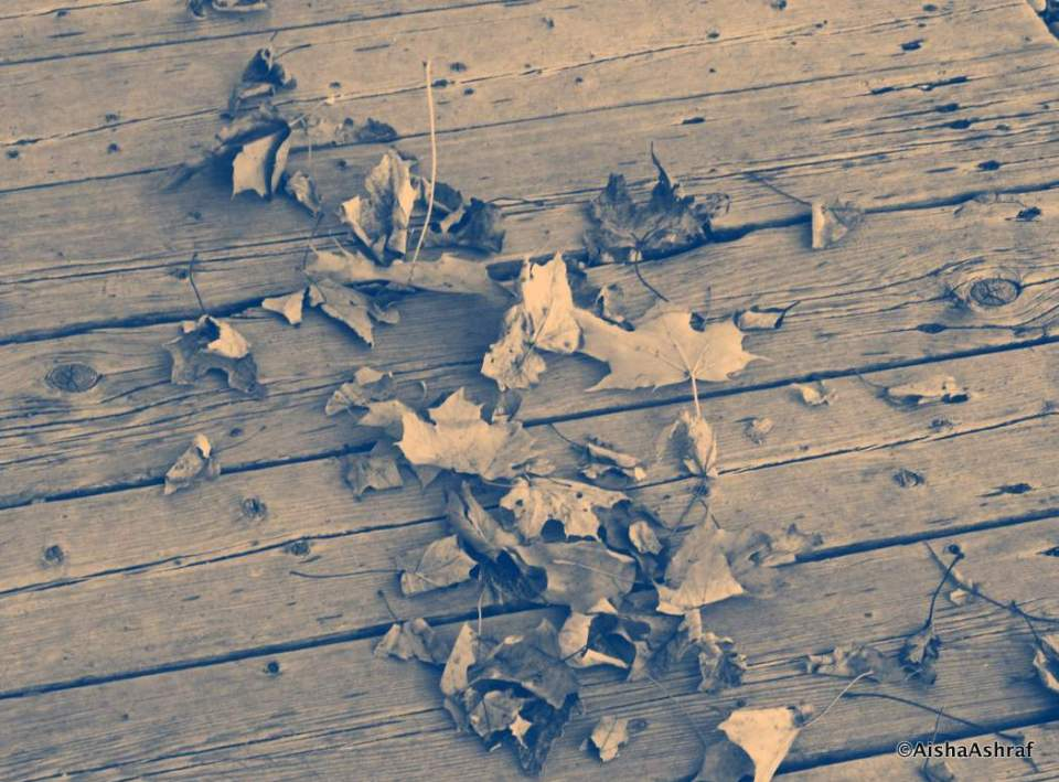 Dead Leaves on wood