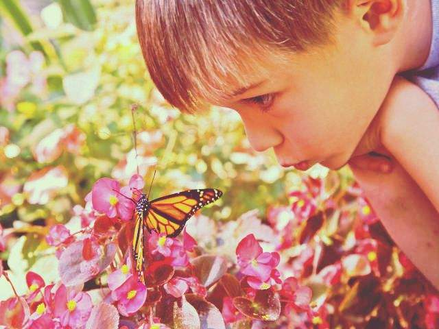 Boy with Monarch Butterfly