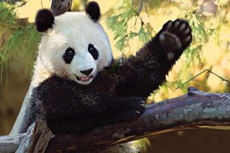 say-hello-chinese-greetings