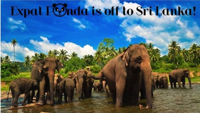 expat-panda-is-off-to-sri-lanka_1731698417