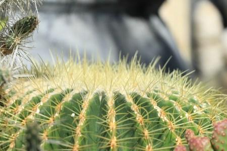 Cactus, Longwood Gardens, Orchid Extravaganza