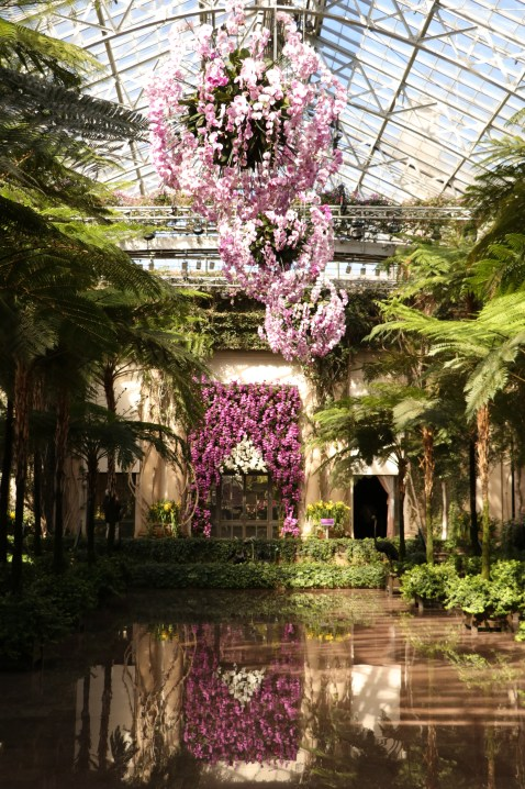 Hanging Orchids, Longwood Gardens, Orchid Extravaganza