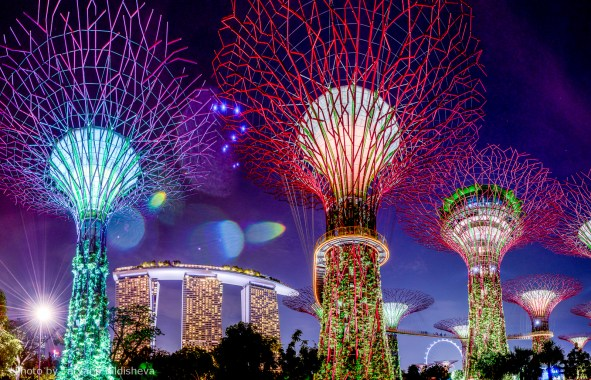 Supertree Grove at Gardens by the Bay Photo credit: Tatyana Kildisheva