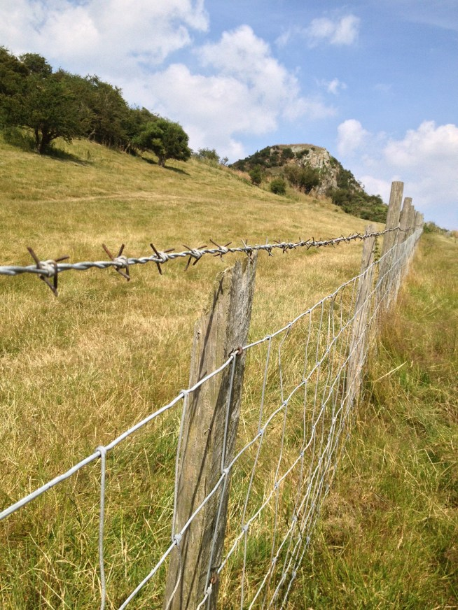 The fence keeping the sheep out of the Deganwy Castle ruins