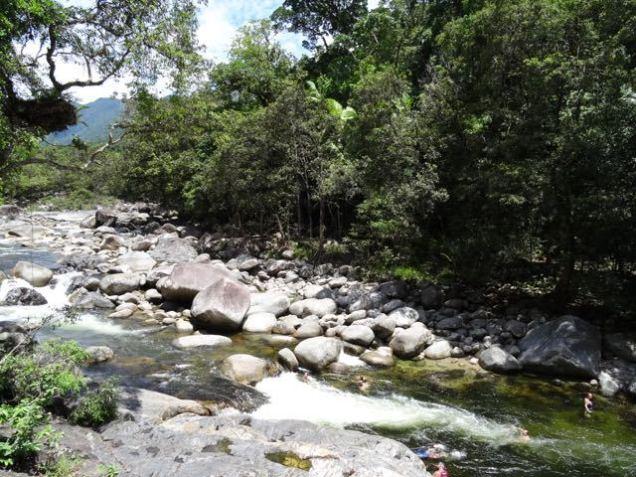 Natur im Moosman Gorge Daintree Nationalpark