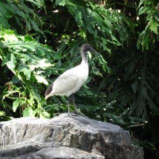 & schöne Vögel