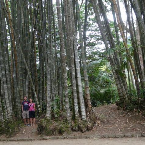 Botanischer Garten in Rio