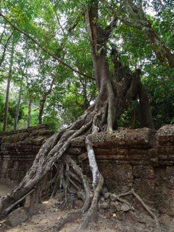 Baum oder Mauer