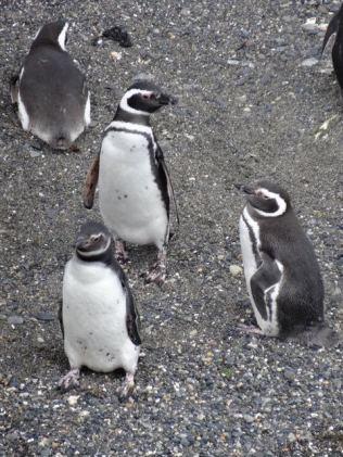 hier wohnen nur Pinguine