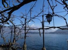 Weinranken am See
