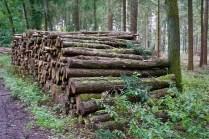 Holz-Produktion
