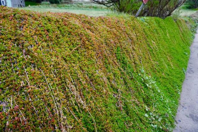 Mauer-Grün in Cornwall