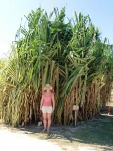 Bambus-Baum
