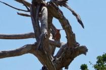 Vogel im Addo Elephant National Park