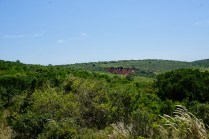 Bewachsung im Addo Elephant National Park