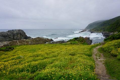 Blühende Wiese im Garden Route National Park