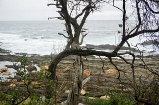 am Ufer wandern im Garden Route National Park
