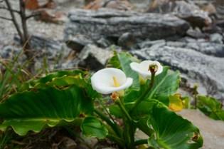 Garden Route National Park mit Blumen