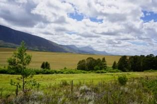 Wiesen und Bäume in Südafrika