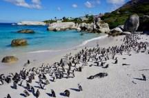 Pinguine im Sand