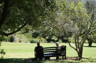Parkbank unter Bäumen