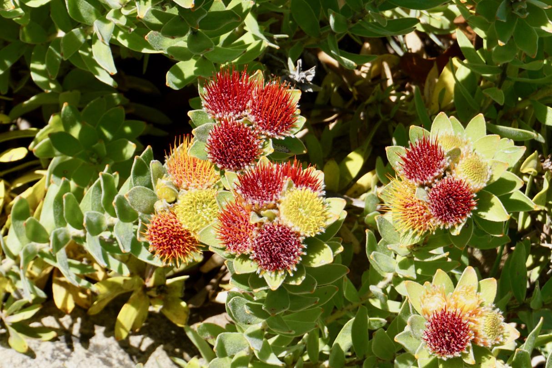 Blumen mit zweifarbigen Blüten