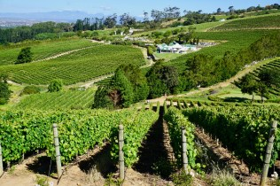Weinanbau in Kapstadt