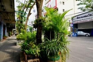 Pflanzen an der Straße in Bangkok
