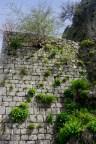 Mauer mit Pflanzen