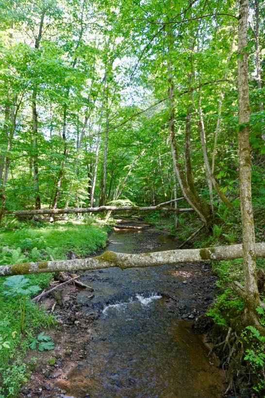 Flusslauf im Nationalpark