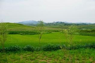 Reisfelder in Korea