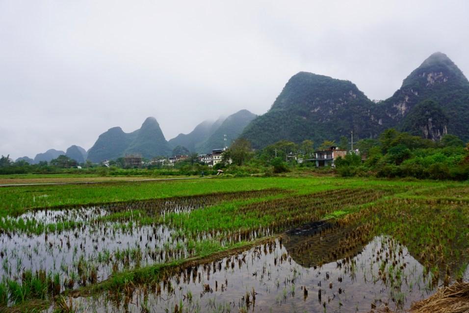 Reisfelder und Berge als Spiegelbild