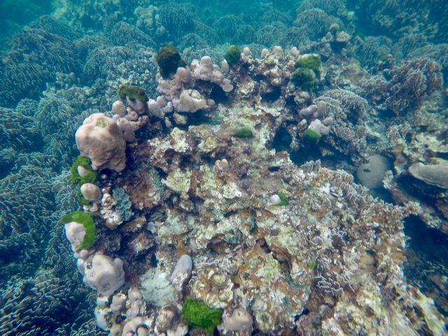 Unterwasserwelt vor Koh Lipe